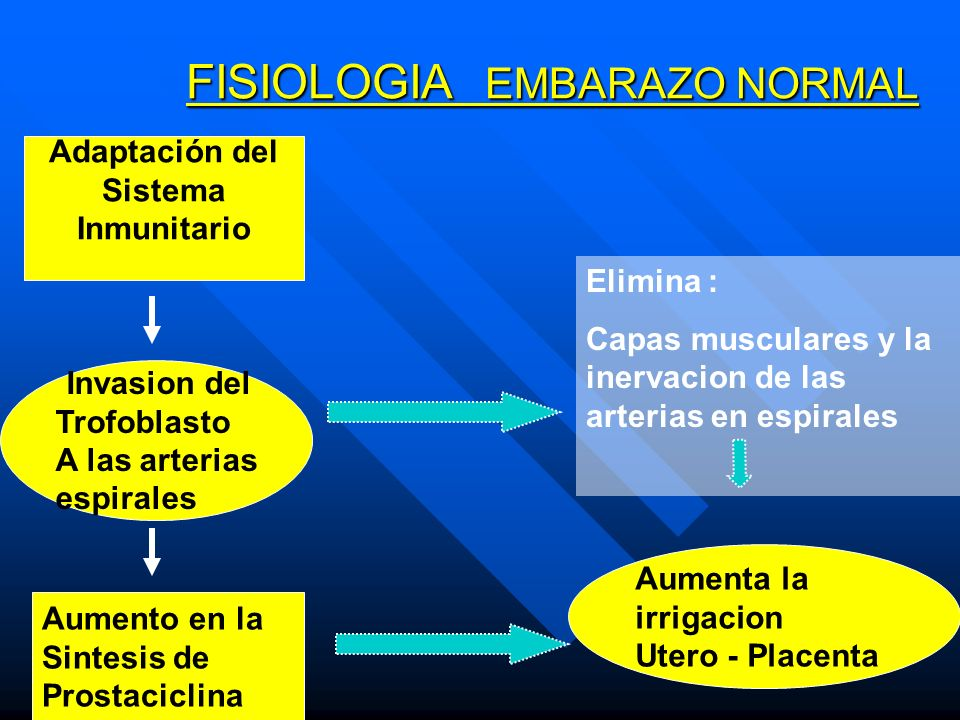 FISIOLOGIA EMBARAZO NORMAL