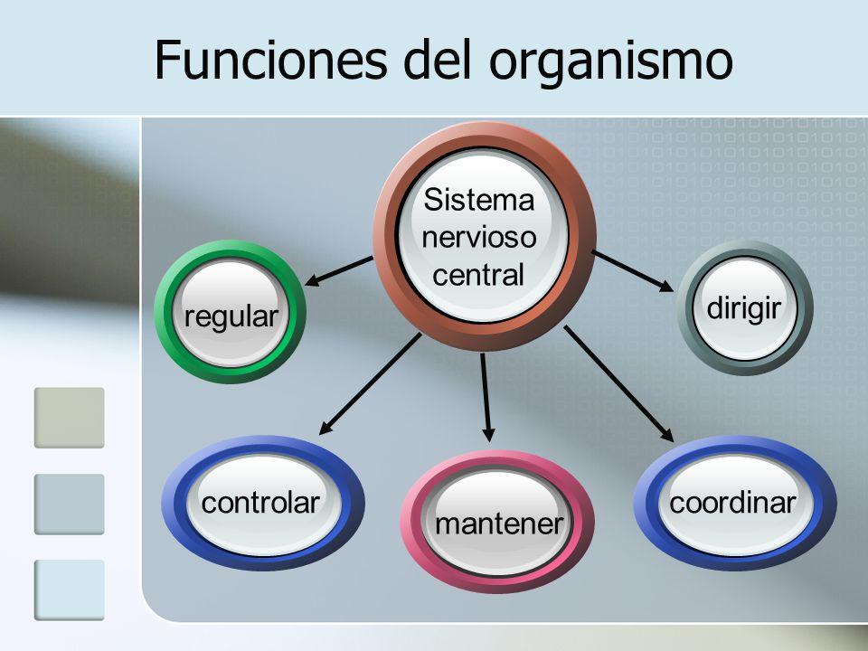 Funciones del organismo