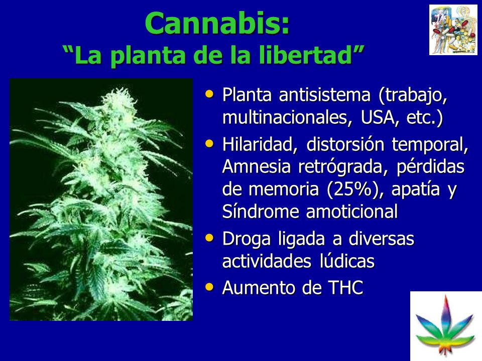 Cannabis: La planta de la libertad