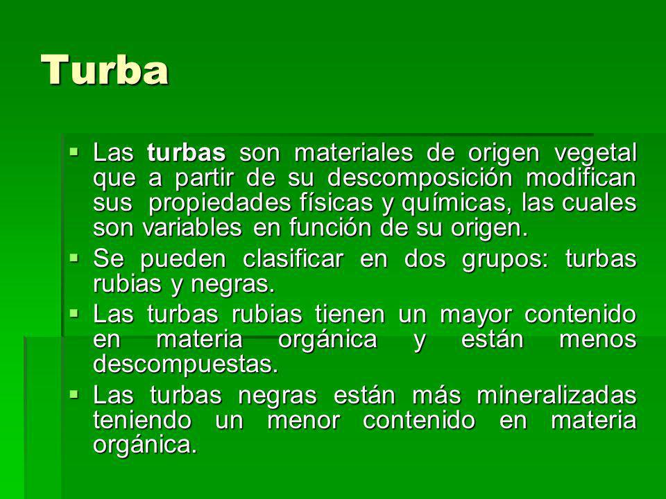 Turba