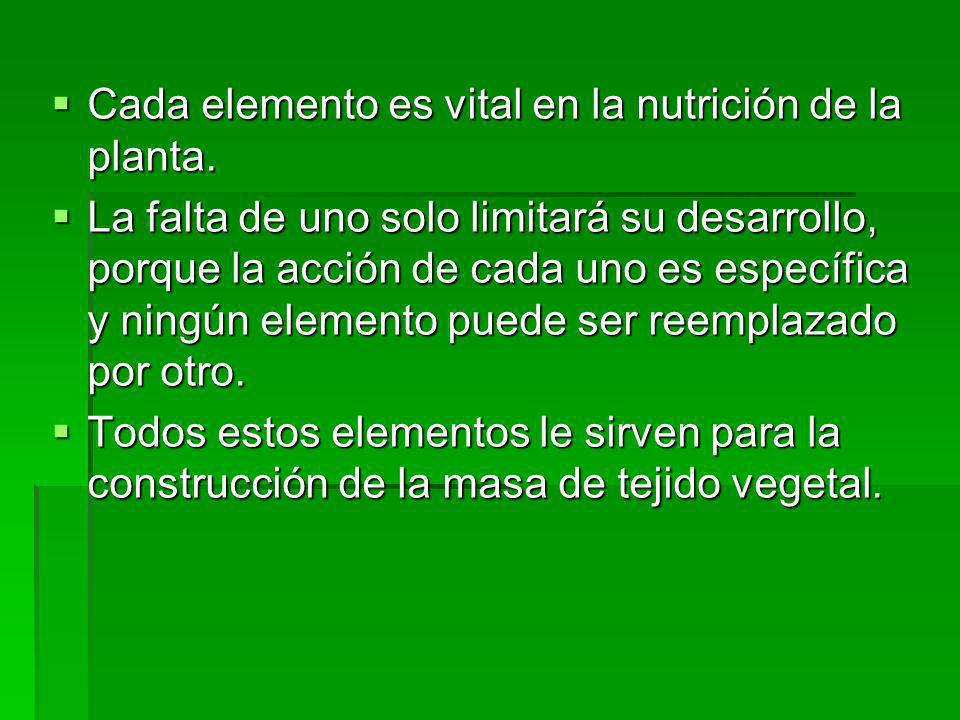 Cada elemento es vital en la nutrición de la planta.