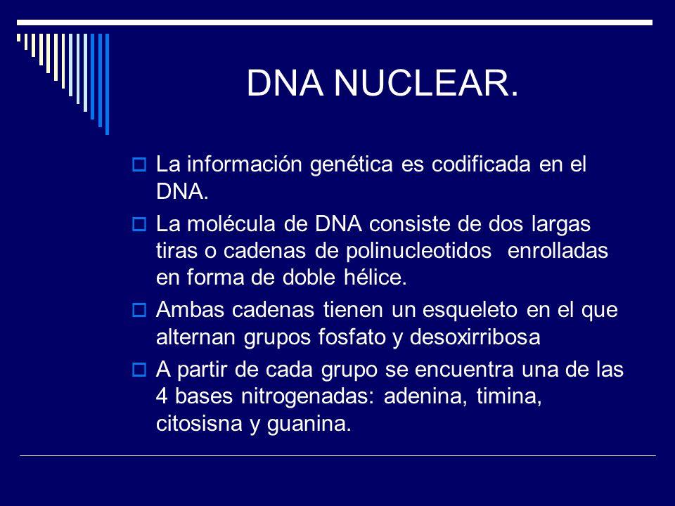 DNA NUCLEAR. La información genética es codificada en el DNA.