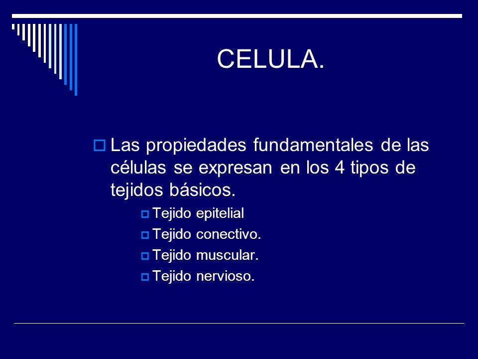CELULA. Las propiedades fundamentales de las células se expresan en los 4 tipos de tejidos básicos.