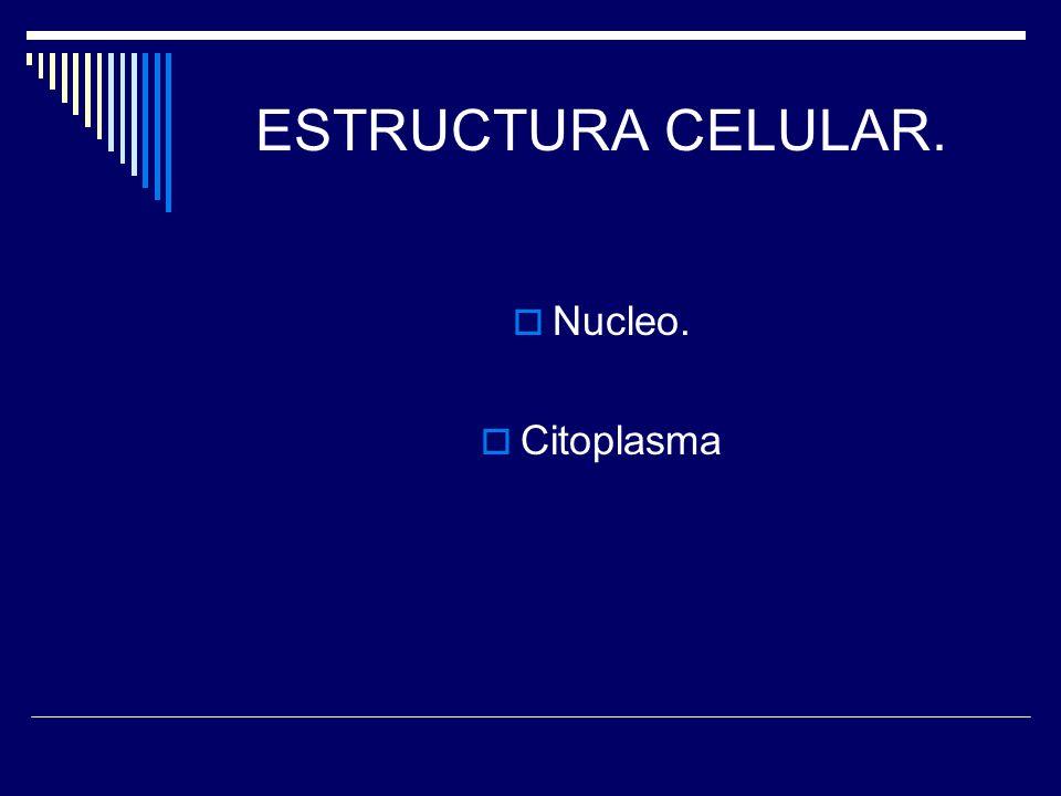 ESTRUCTURA CELULAR. Nucleo. Citoplasma