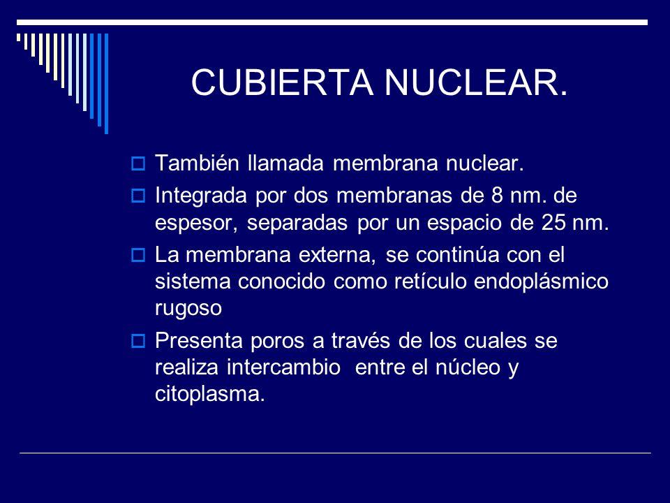 CUBIERTA NUCLEAR. También llamada membrana nuclear.