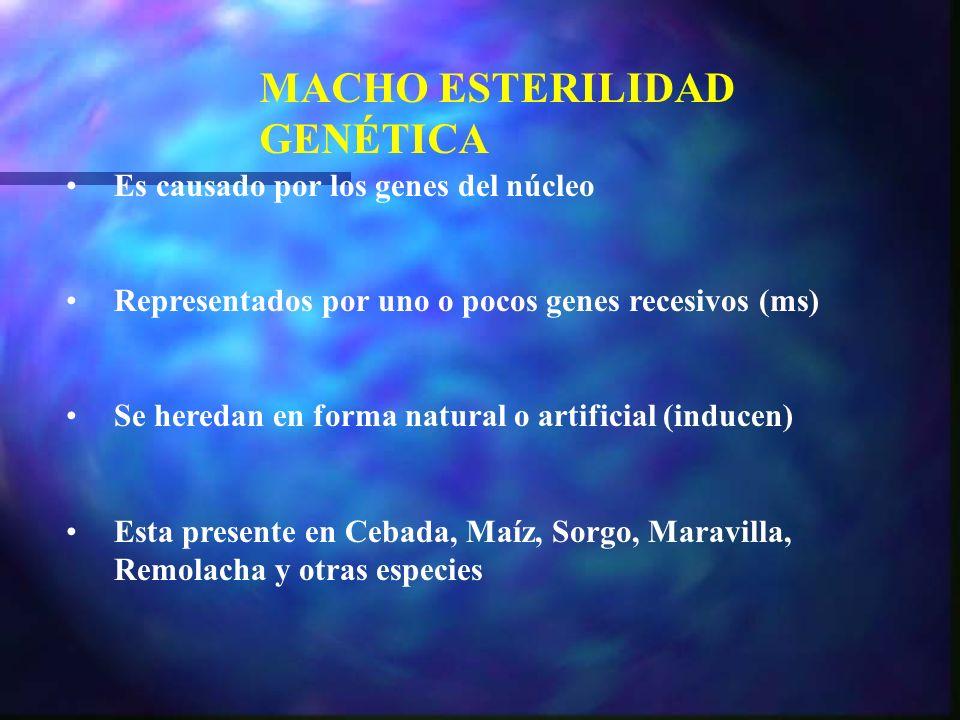 MACHO ESTERILIDAD GENÉTICA