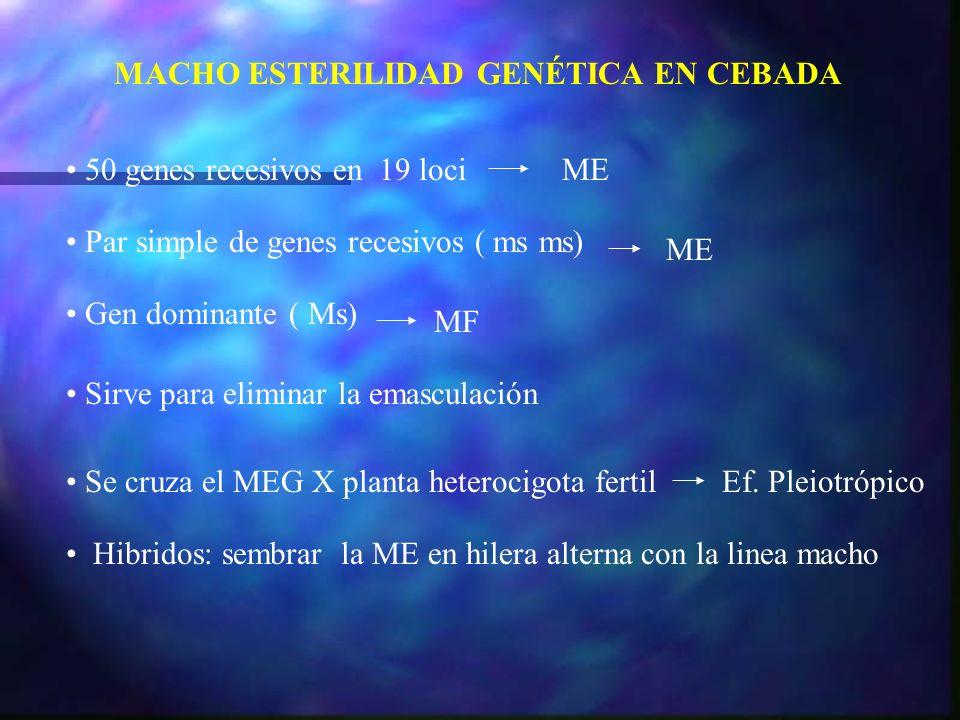 MACHO ESTERILIDAD GENÉTICA EN CEBADA