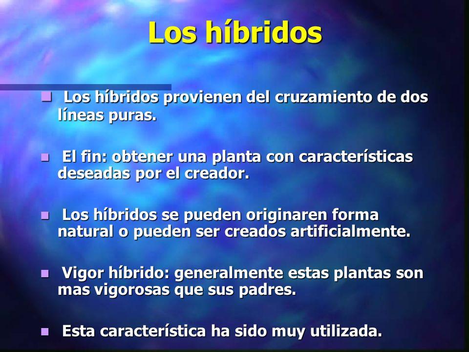 Los híbridos Los híbridos provienen del cruzamiento de dos líneas puras. El fin: obtener una planta con características deseadas por el creador.