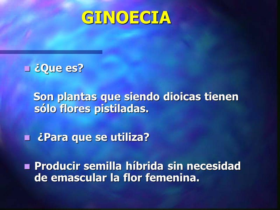 GINOECIA ¿Que es Son plantas que siendo dioicas tienen sólo flores pistiladas. ¿Para que se utiliza