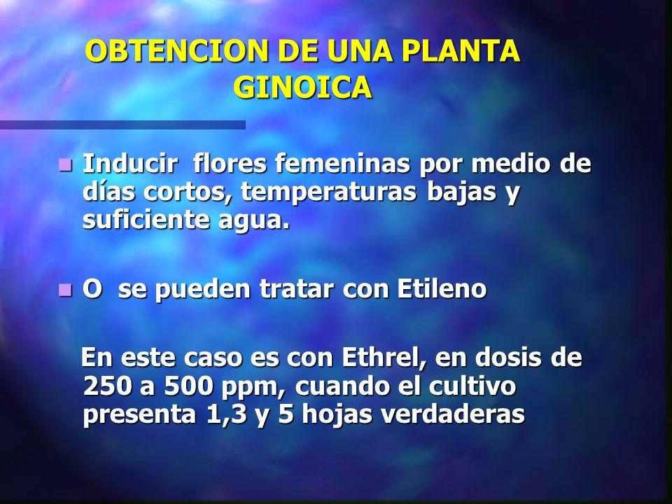 OBTENCION DE UNA PLANTA GINOICA