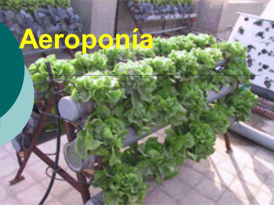 Aeroponía