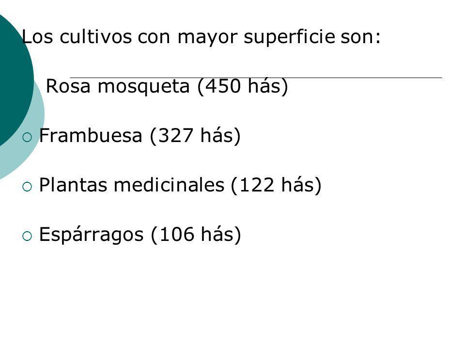 Los cultivos con mayor superficie son: