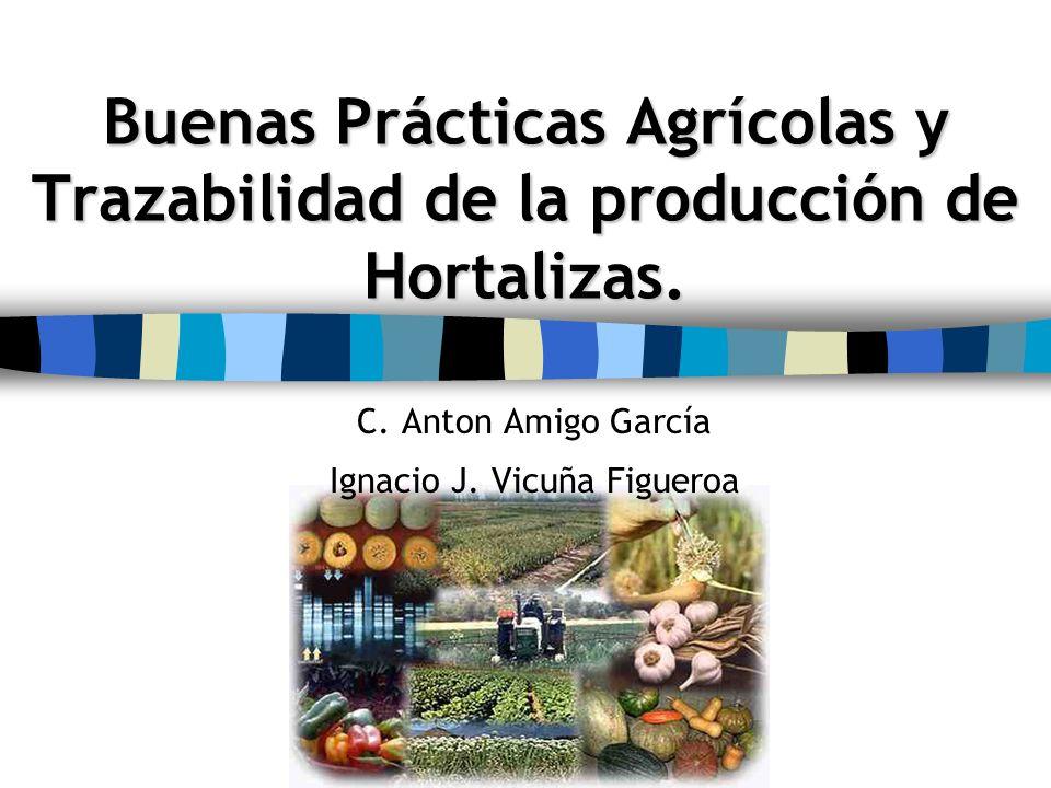 C. Anton Amigo García Ignacio J. Vicuña Figueroa
