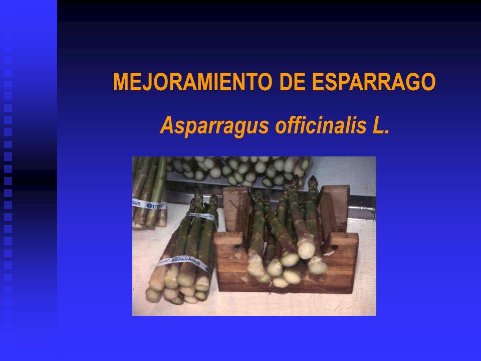 MEJORAMIENTO DE ESPARRAGO Asparragus officinalis L.