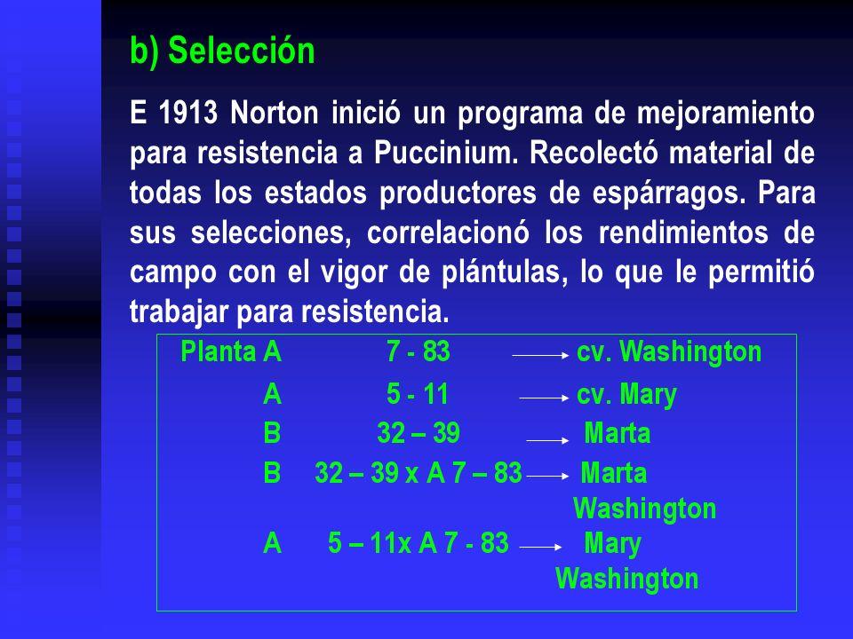 b) Selección