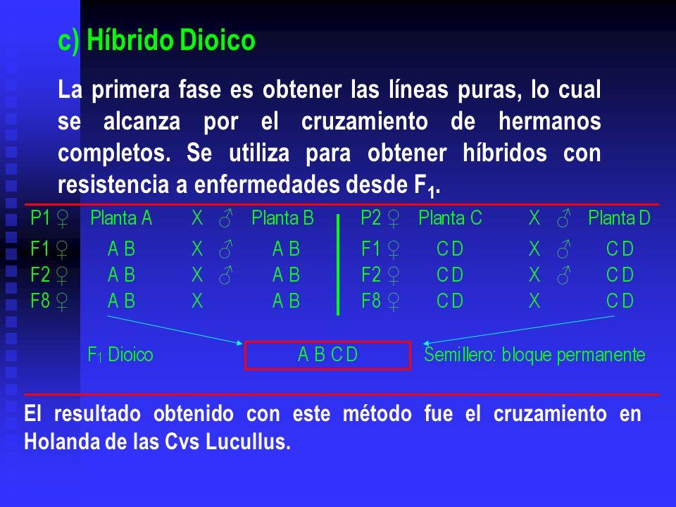 c) Híbrido Dioico
