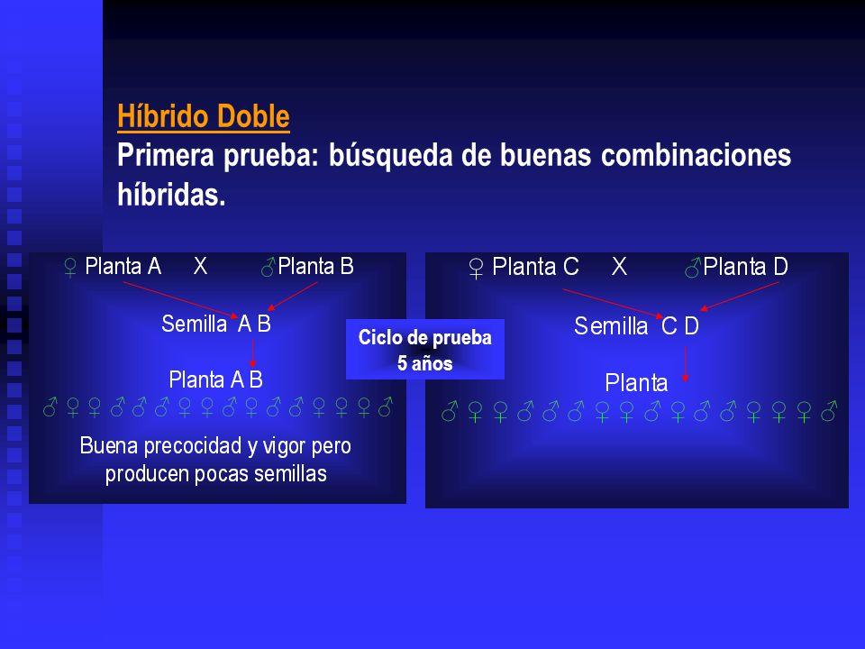 Híbrido Doble Primera prueba: búsqueda de buenas combinaciones híbridas.
