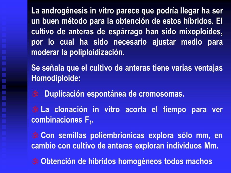 La androgénesis in vitro parece que podría llegar ha ser un buen método para la obtención de estos híbridos. El cultivo de anteras de espárrago han sido mixoploides, por lo cual ha sido necesario ajustar medio para moderar la poliploidización.