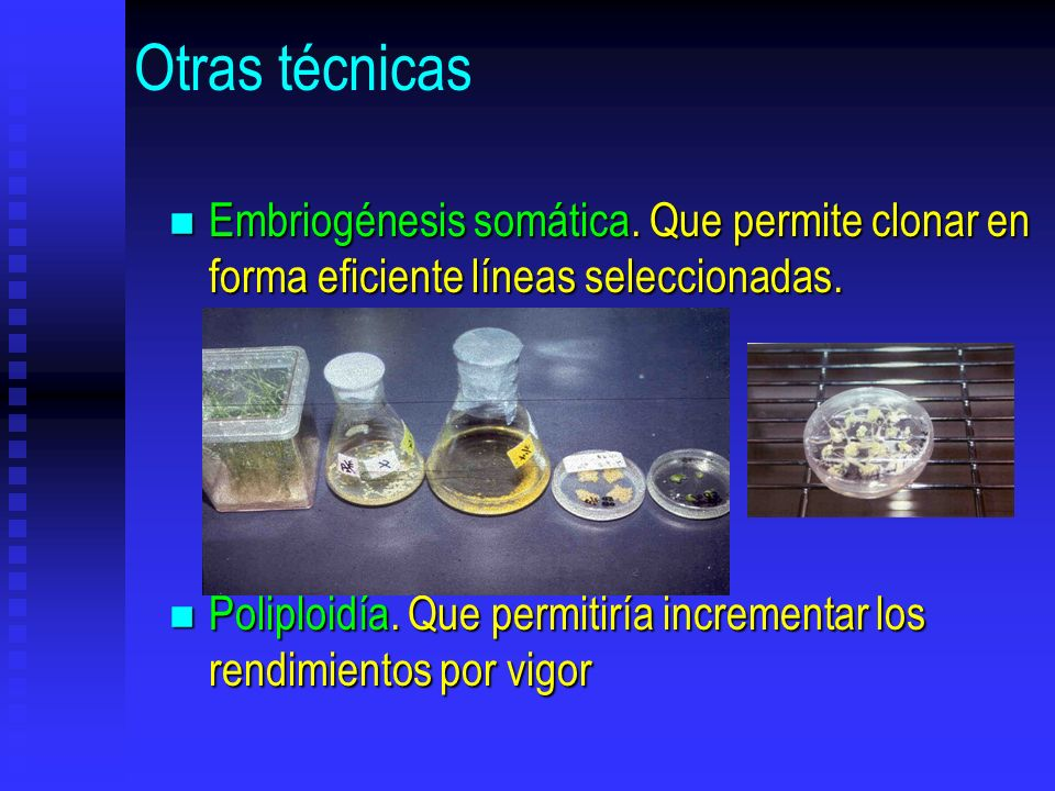 Otras técnicas Embriogénesis somática. Que permite clonar en forma eficiente líneas seleccionadas.