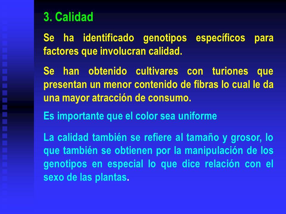 3. Calidad Se ha identificado genotipos específicos para factores que involucran calidad.