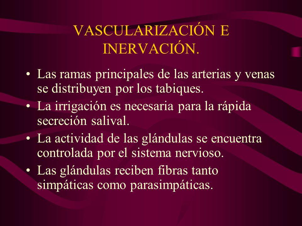 VASCULARIZACIÓN E INERVACIÓN.