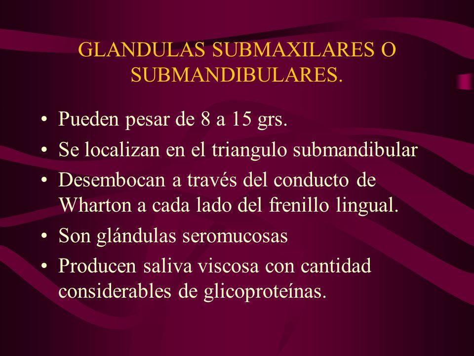 GLANDULAS SUBMAXILARES O SUBMANDIBULARES.