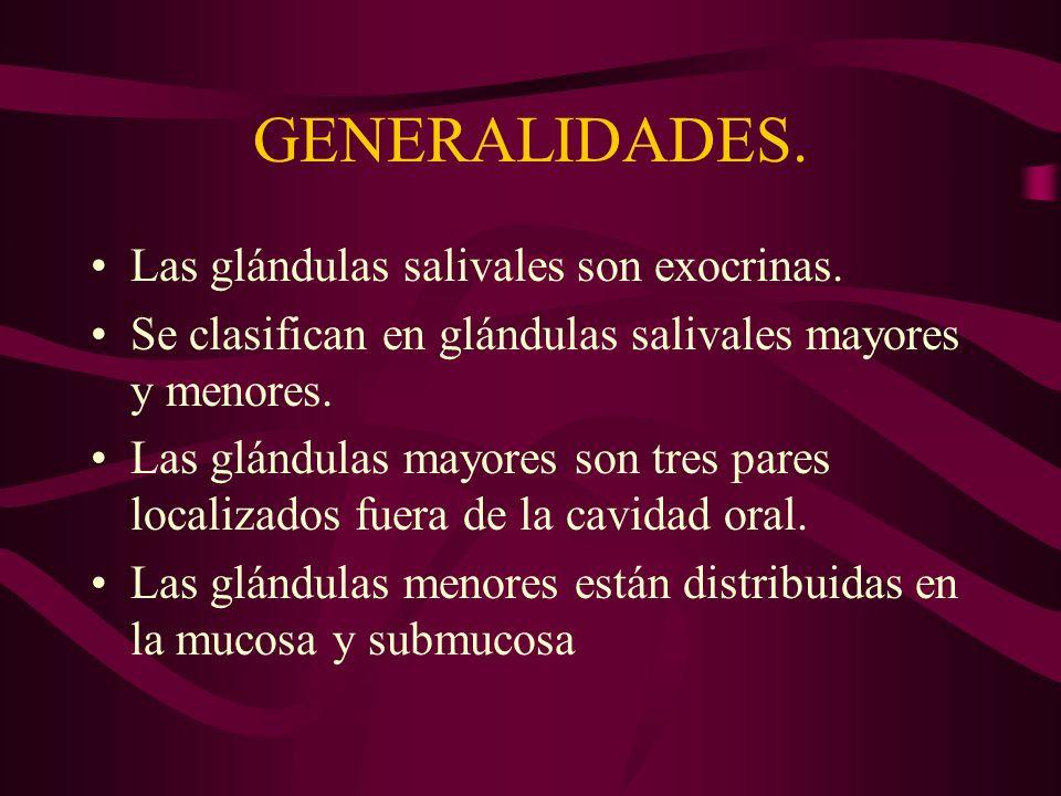 GENERALIDADES. Las glándulas salivales son exocrinas.