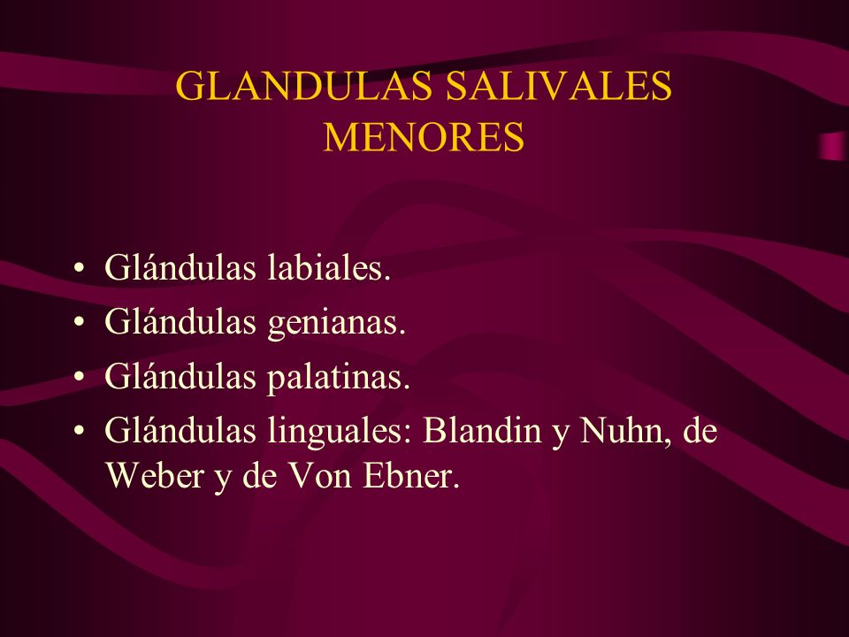 GLANDULAS SALIVALES MENORES