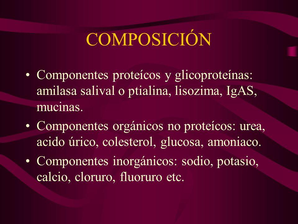 COMPOSICIÓN Componentes proteícos y glicoproteínas: amilasa salival o ptialina, lisozima, IgAS, mucinas.