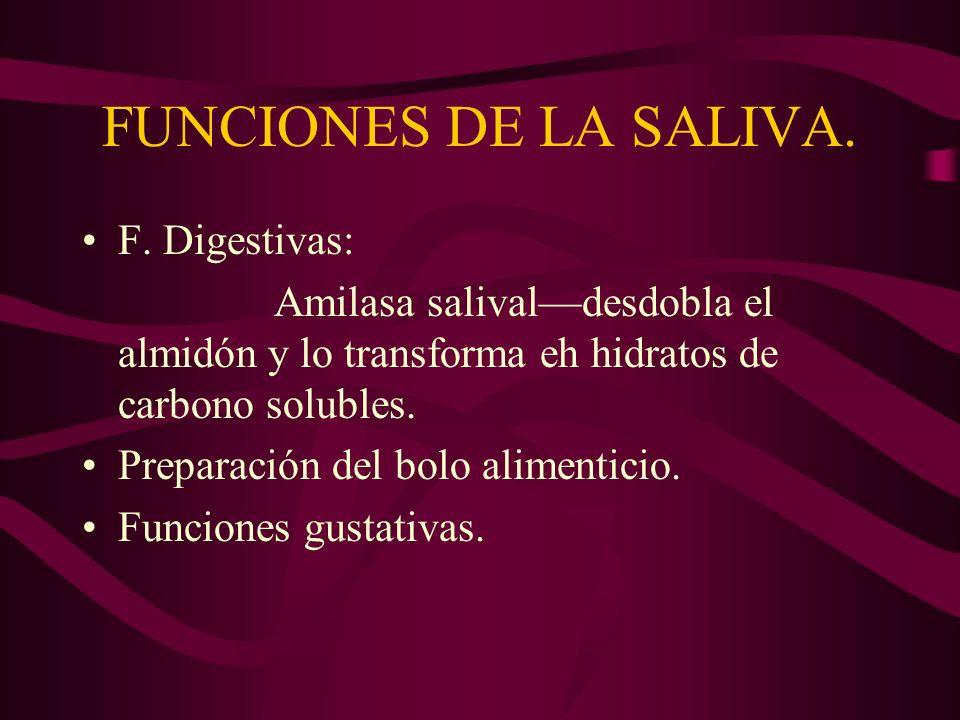 FUNCIONES DE LA SALIVA. F. Digestivas: