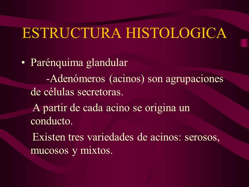 ESTRUCTURA HISTOLOGICA