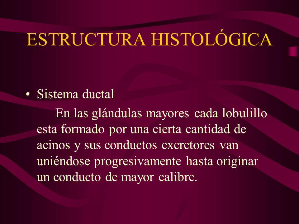 ESTRUCTURA HISTOLÓGICA