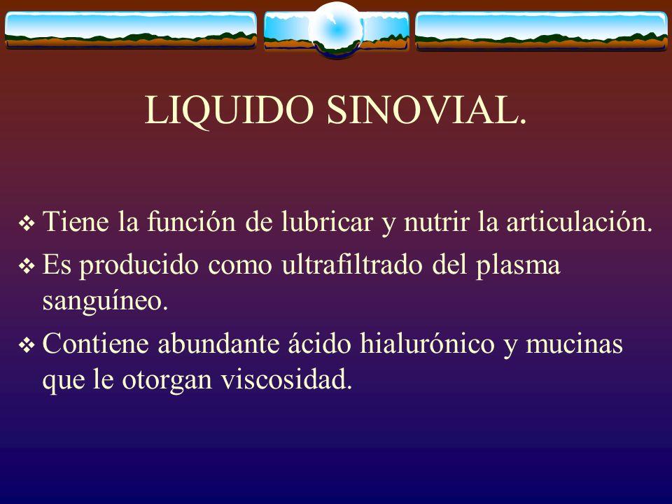 LIQUIDO SINOVIAL. Tiene la función de lubricar y nutrir la articulación. Es producido como ultrafiltrado del plasma sanguíneo.
