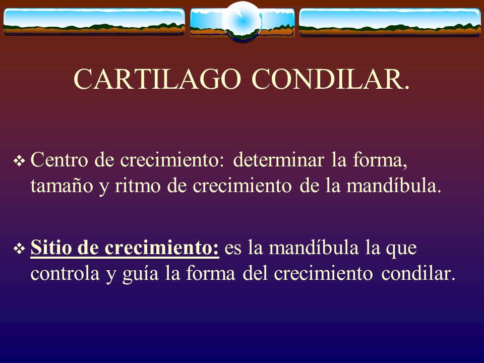 CARTILAGO CONDILAR. Centro de crecimiento: determinar la forma, tamaño y ritmo de crecimiento de la mandíbula.