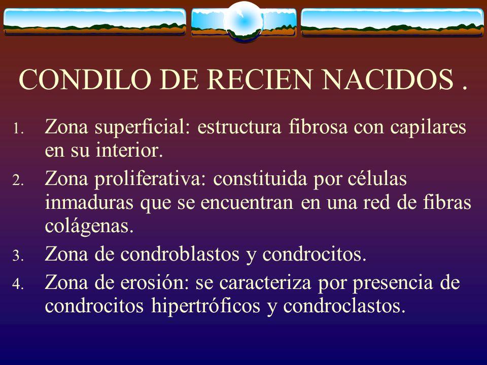 CONDILO DE RECIEN NACIDOS .