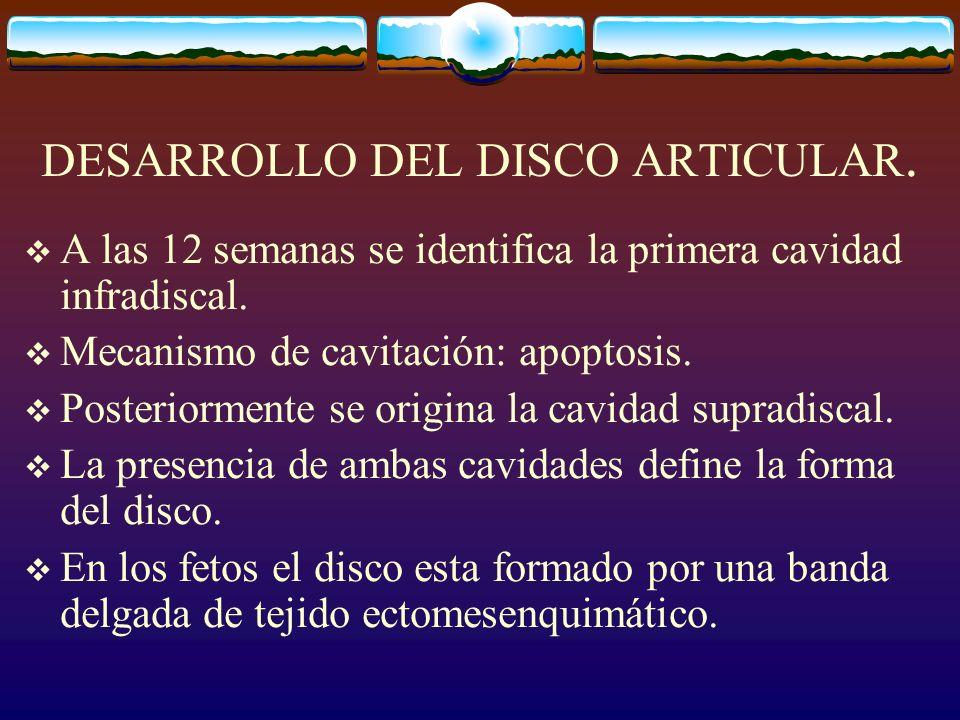 DESARROLLO DEL DISCO ARTICULAR.