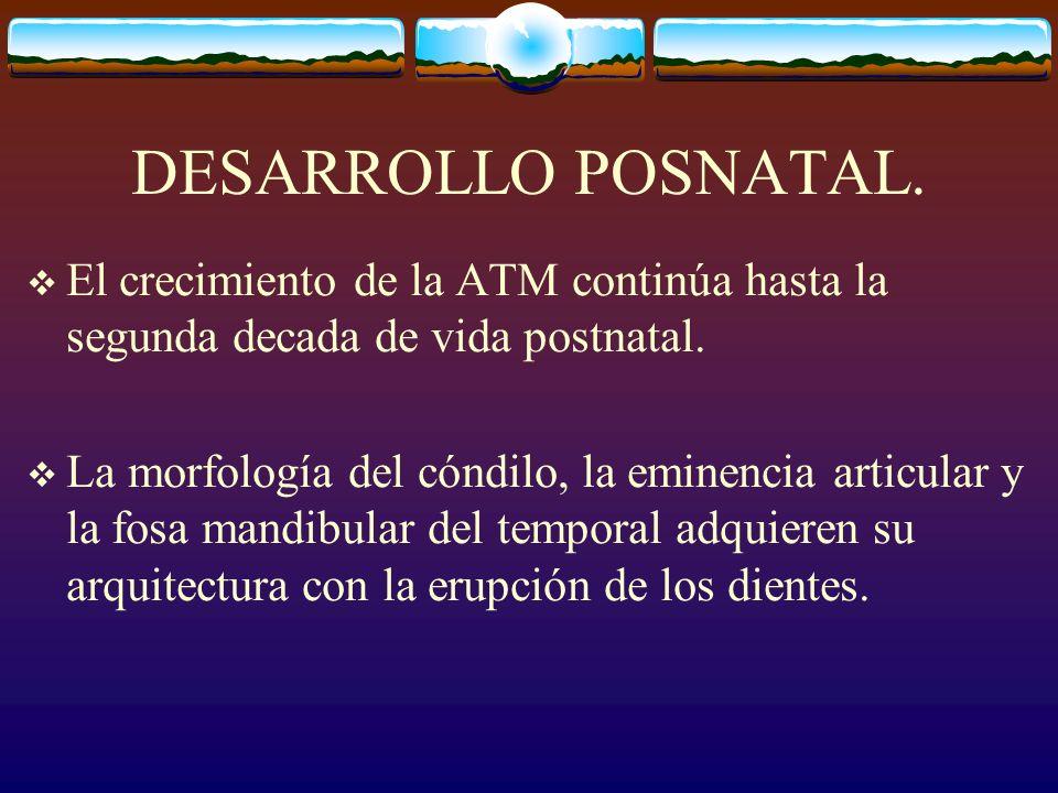 DESARROLLO POSNATAL. El crecimiento de la ATM continúa hasta la segunda decada de vida postnatal.