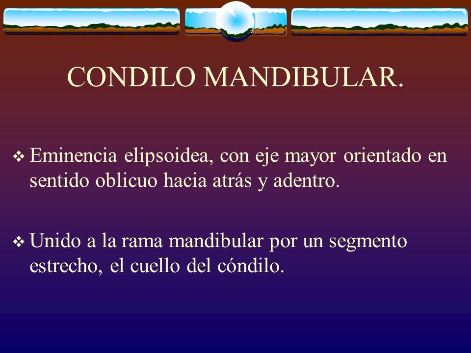 CONDILO MANDIBULAR. Eminencia elipsoidea, con eje mayor orientado en sentido oblicuo hacia atrás y adentro.