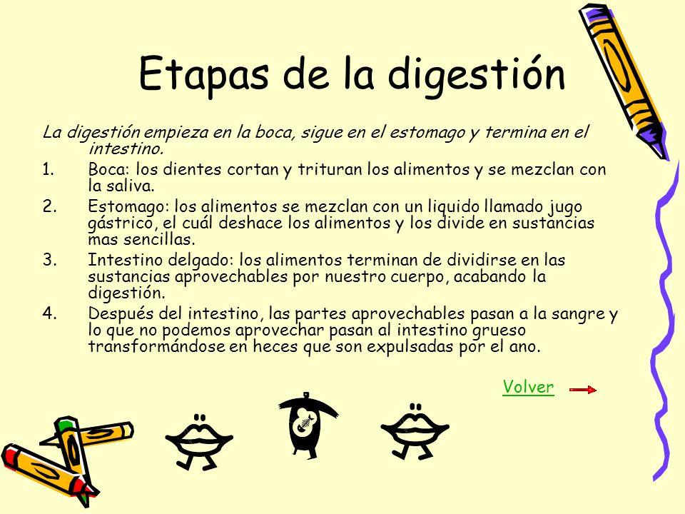 Etapas de la digestiónLa digestión empieza en la boca, sigue en el estomago y termina en el intestino.