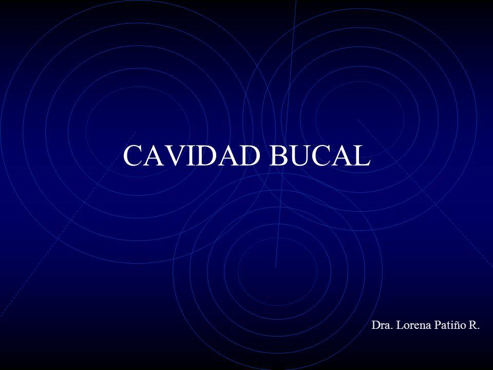 CAVIDAD BUCAL Dra. Lorena Patiño R.