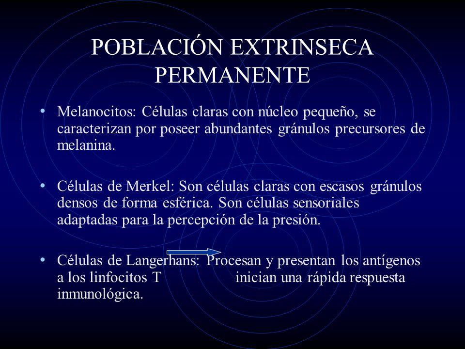 POBLACIÓN EXTRINSECA PERMANENTE