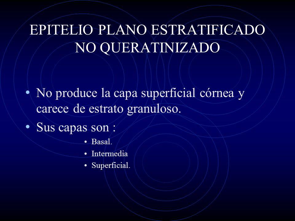 EPITELIO PLANO ESTRATIFICADO NO QUERATINIZADO