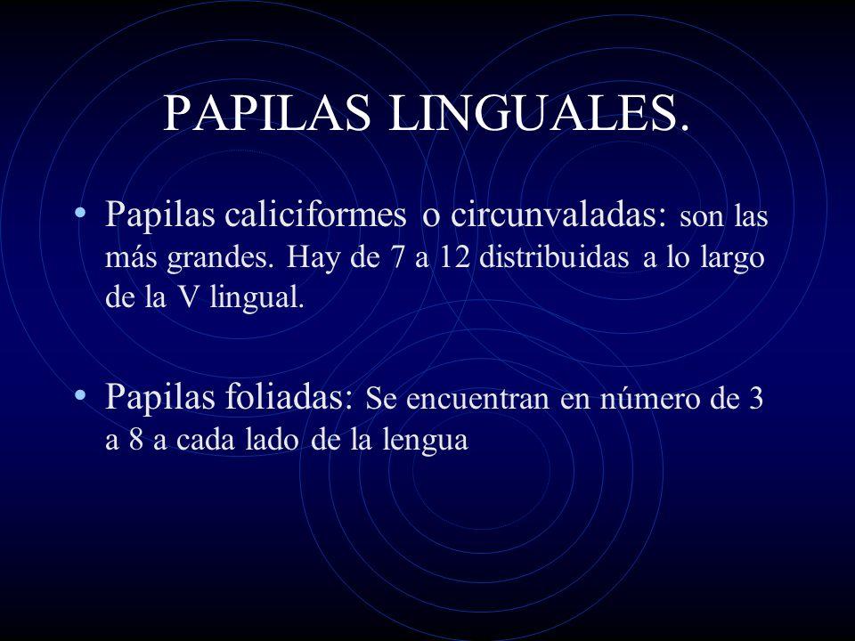 PAPILAS LINGUALES.Papilas caliciformes o circunvaladas: son las más grandes. Hay de 7 a 12 distribuidas a lo largo de la V lingual.