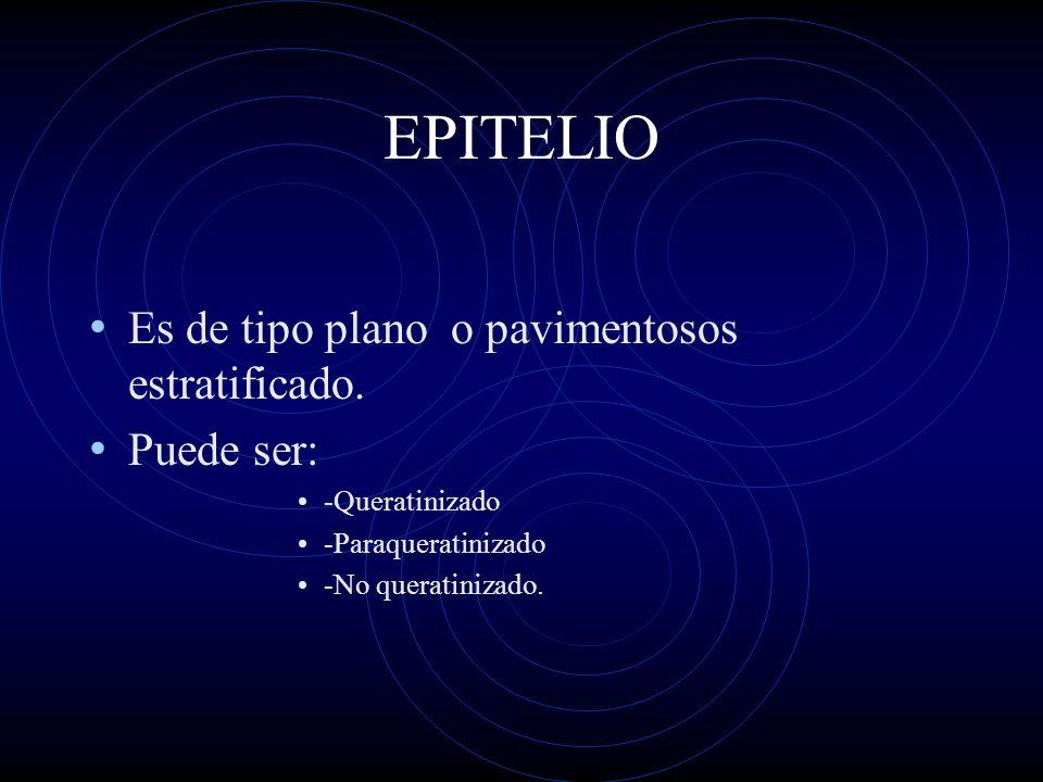 EPITELIO Es de tipo plano o pavimentosos estratificado. Puede ser: