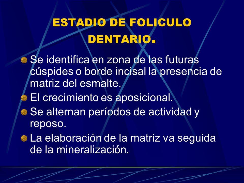 ESTADIO DE FOLICULO DENTARIO.