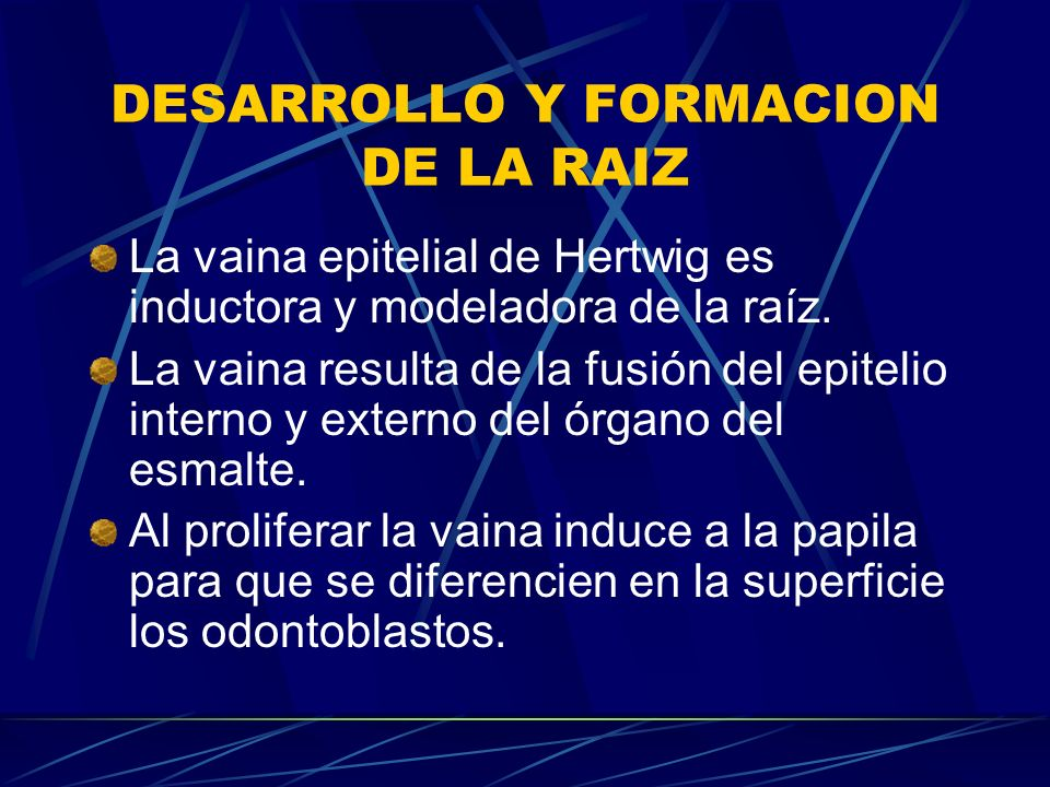DESARROLLO Y FORMACION DE LA RAIZ