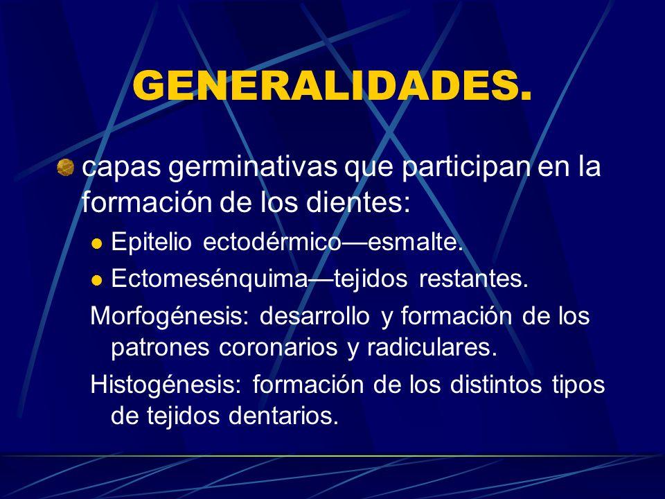 GENERALIDADES. capas germinativas que participan en la formación de los dientes: Epitelio ectodérmico—esmalte.
