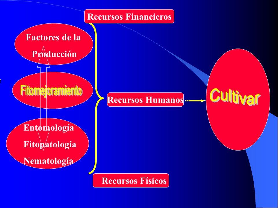 Fitomejoramiento Cultivar Recursos Financieros Factores de la