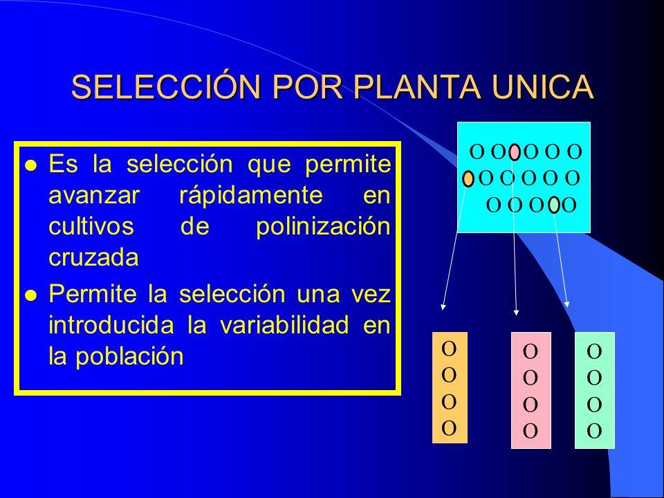 SELECCIÓN POR PLANTA UNICA