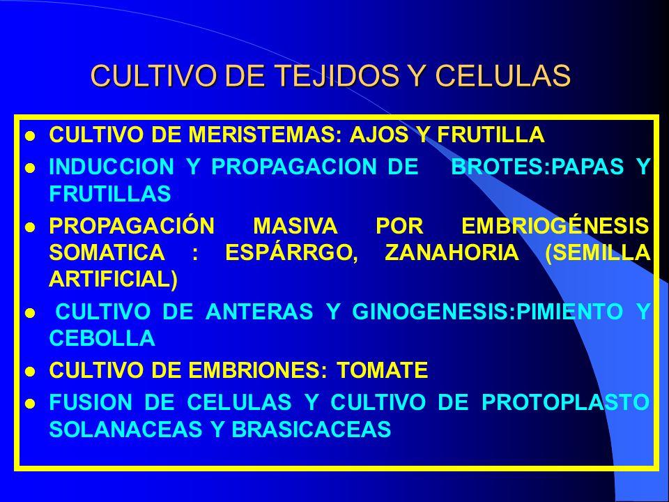 CULTIVO DE TEJIDOS Y CELULAS